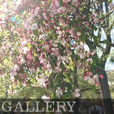 SPNA Gallery