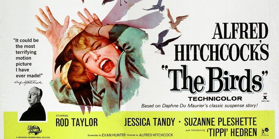 Summer Outdoor Movie Night: The Birds Poster