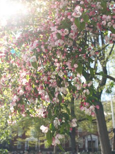 Stuyvesant Park Spring